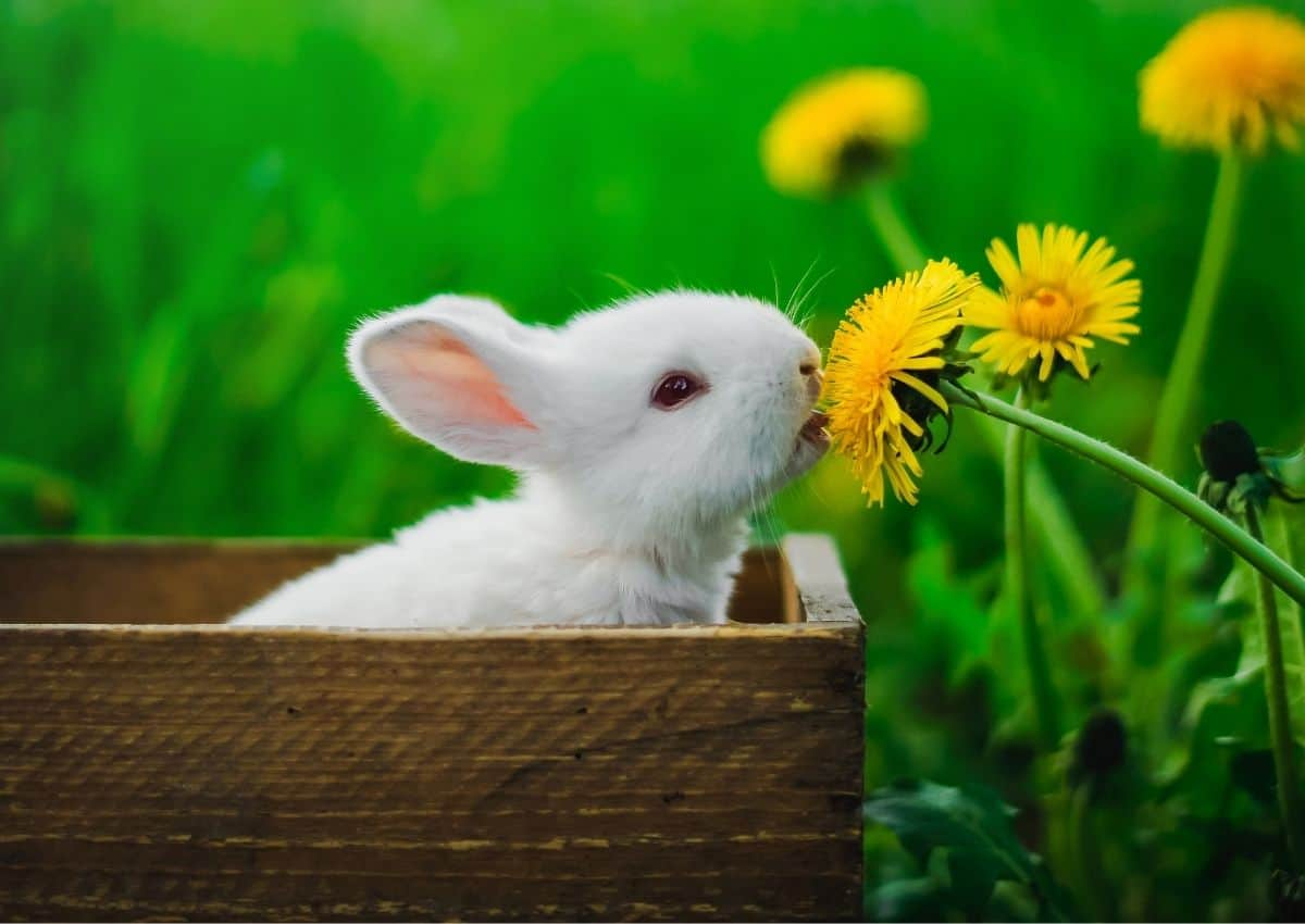 Can Rabbits Eat That Ultimate List What's Safe & Not Safe ...